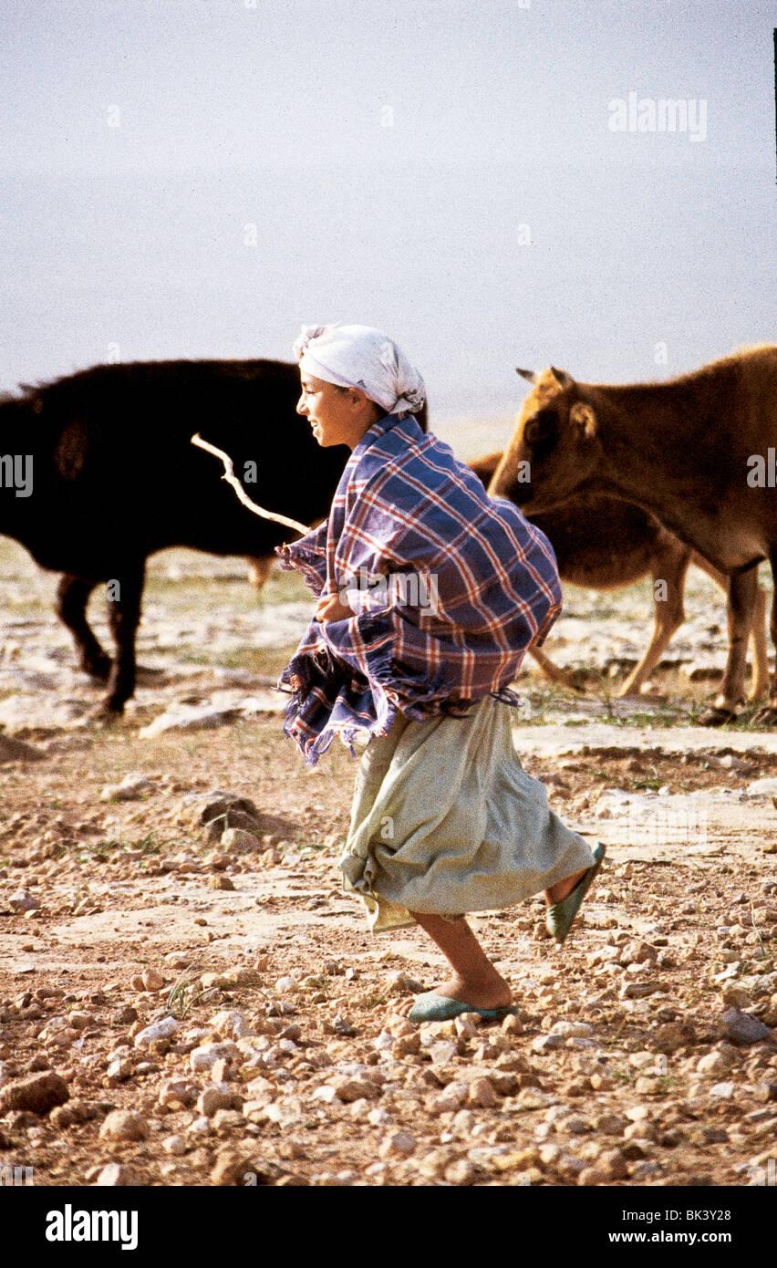 Girl herding cattle near Safi, Morocco - Stock Image