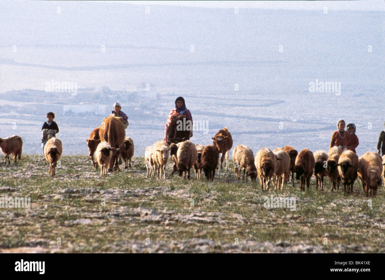 Women and children herding sheep and cattle, Morocco - Stock Image
