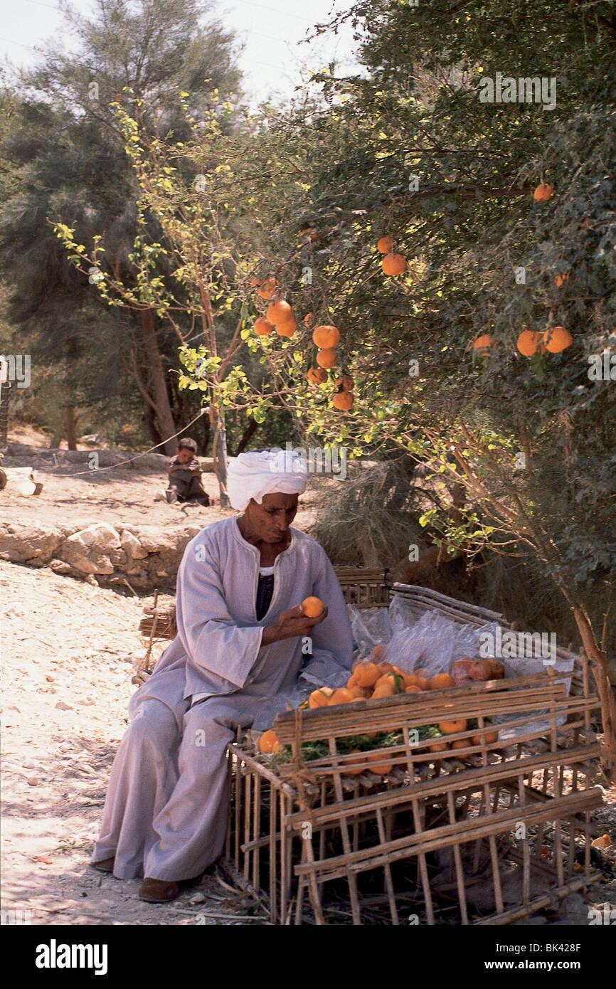 Fruit vendor next to an orange tree, Egypt Stock Photo