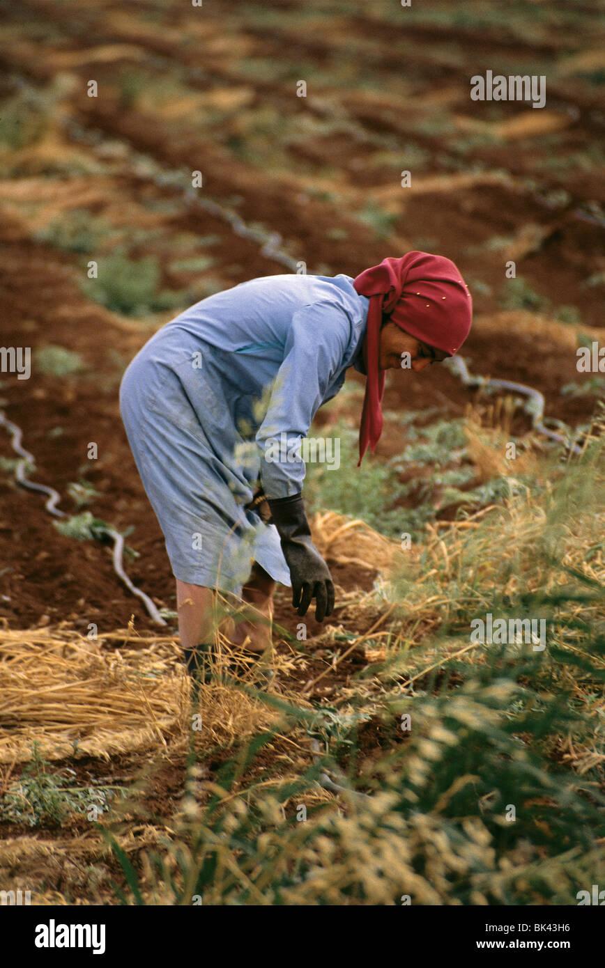 Farm worker, Israel - Stock Image