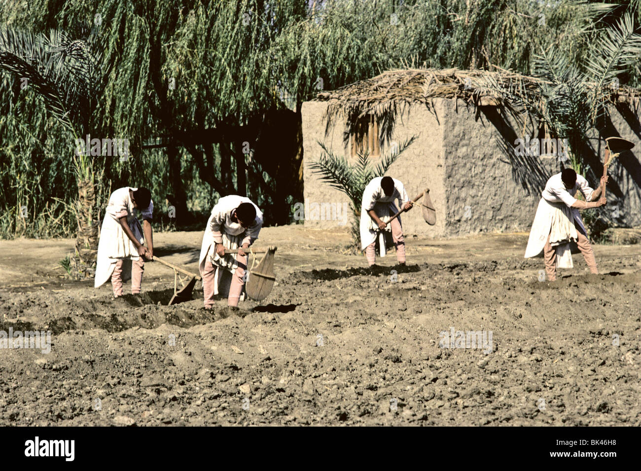Historic portrayal of Egyptian men digging irrigation ditches in an agricultural field at Dr Ragab's Pharaonic - Stock Image