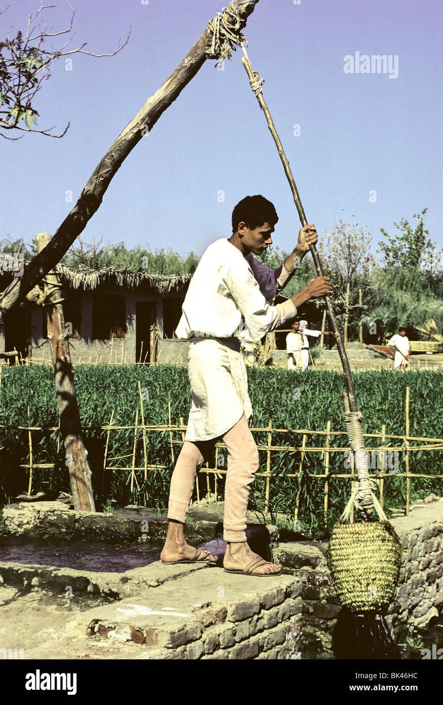 Egyptian Man Using A Shadoof (historic Irrigation Tool) At