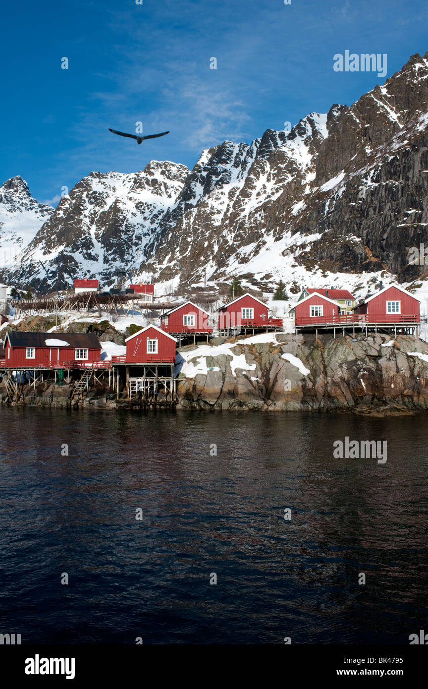 Traditional red wooden Rorbu fishermens` huts in village of Henningsvaer in Lofoten Islands in Norway - Stock Image