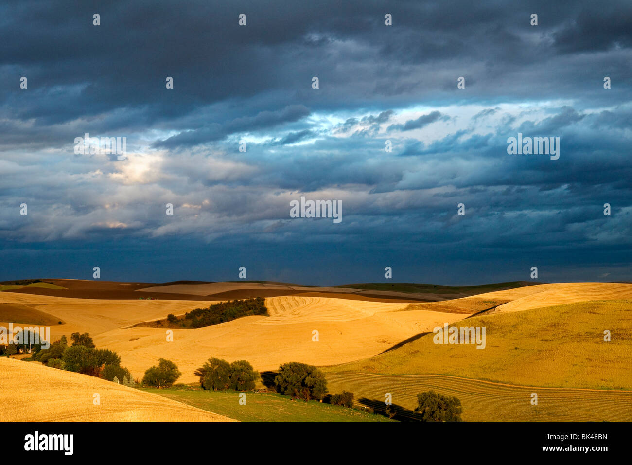 Sunlight breaks through the clouds to light up mature wheat fields in the Palouse region of Washington - Stock Image