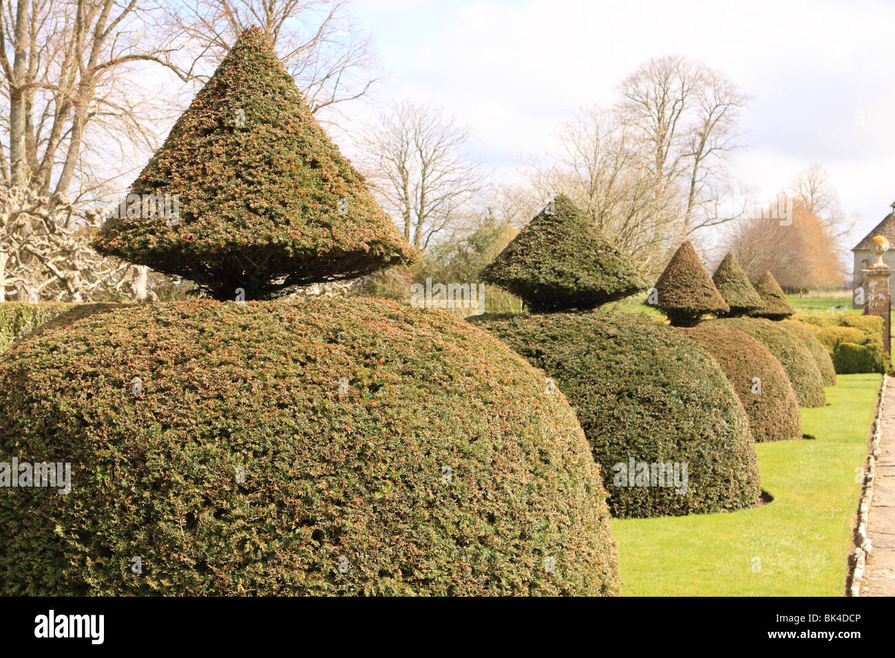Topiary yew bushes shaped in formal garden - Stock Image
