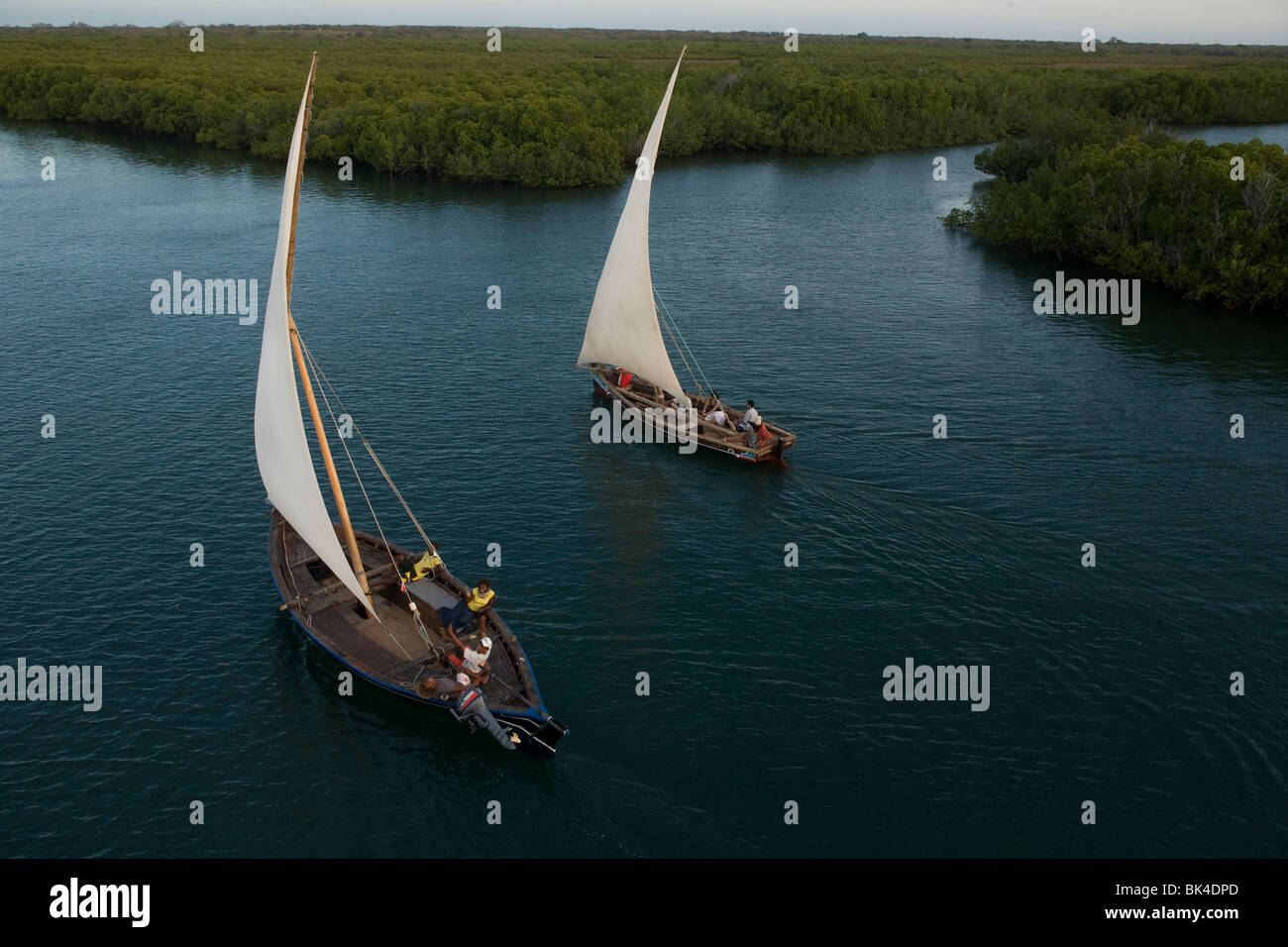 Dhows sail close to the mangrove channels of Manda island on October 9, 2009, Kenya. - Stock Image