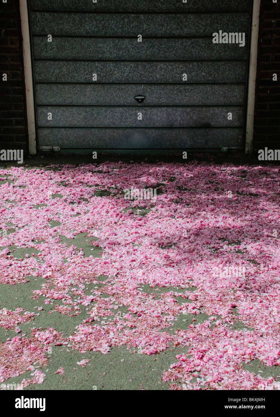Scattering of fallen pink blossom on ground in front of metal garage door - Stock Image