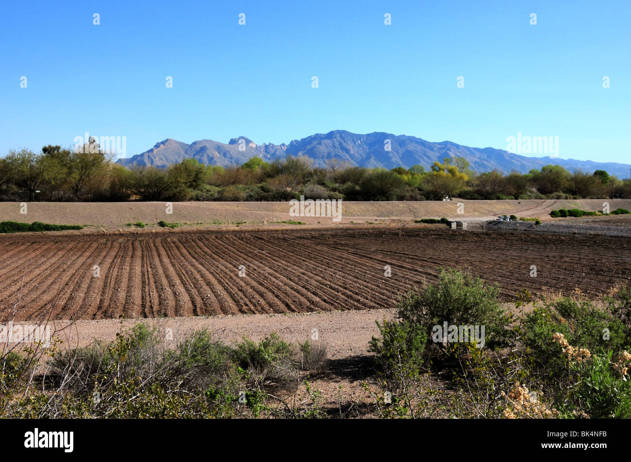 A recharge basin used at Sweetwater Wetlands in Tucson, Arizona, USA. The Santa Catalina Mountains are in the background. - Stock Image