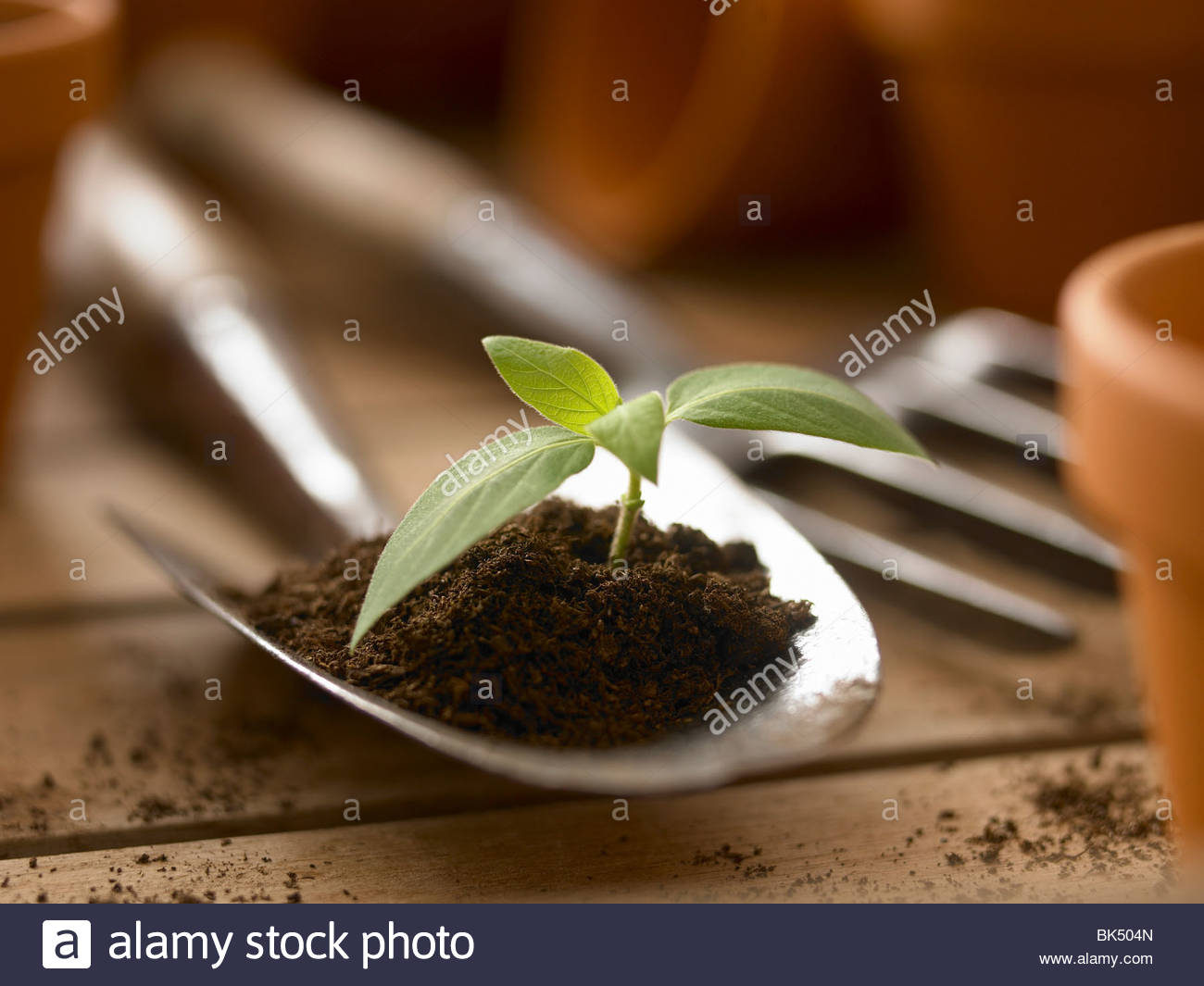Close up of seedling growing in dirt on trowel - Stock Image