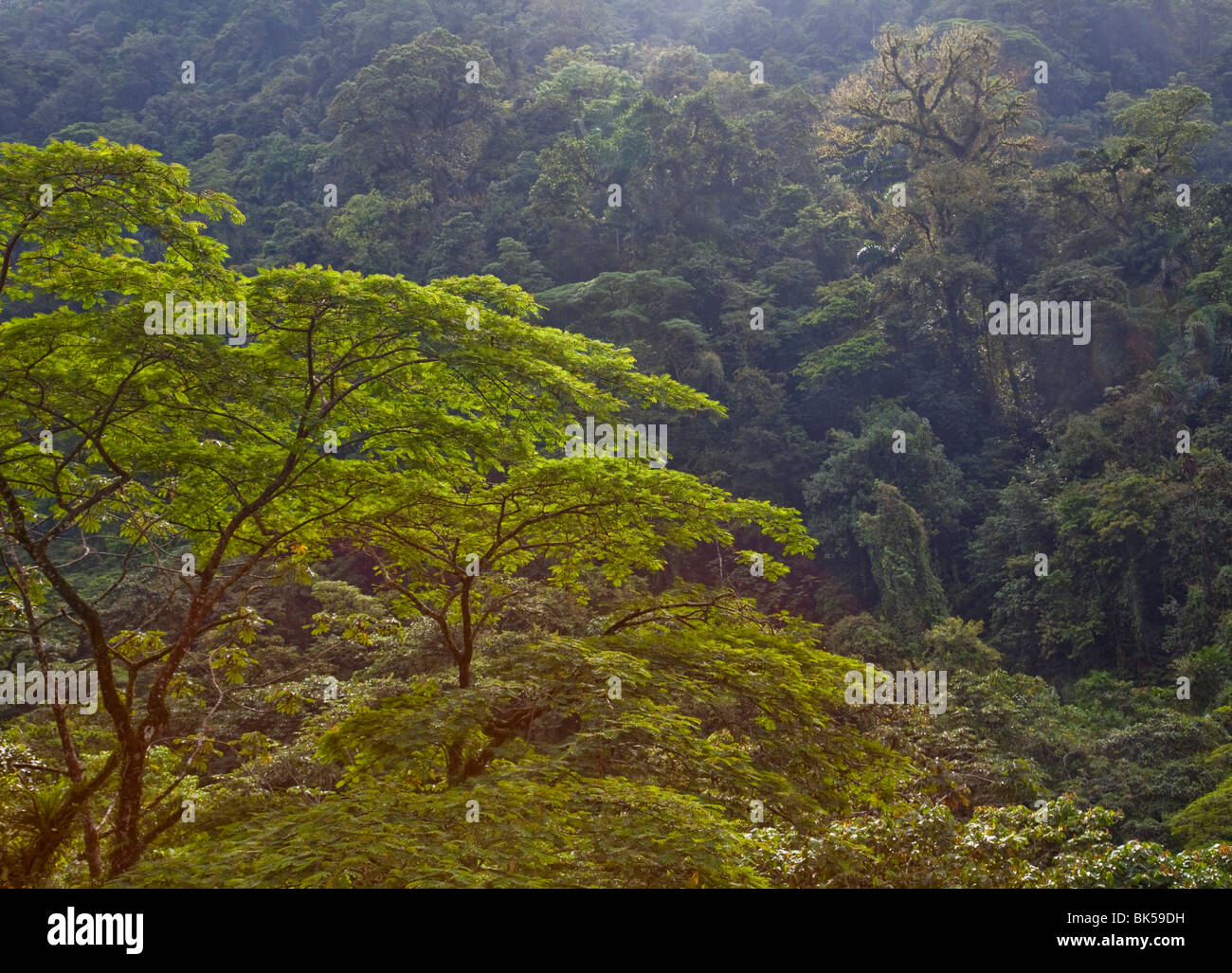 Neotropical rainforest shades of green colours in tropical rainforest and river valley Cost Rica - Stock Image