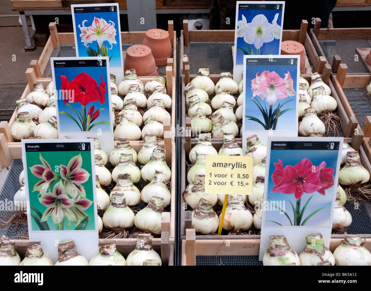 Flower bulbs for sale in flower market in central Amsterdam in Netherlands Stock Photo
