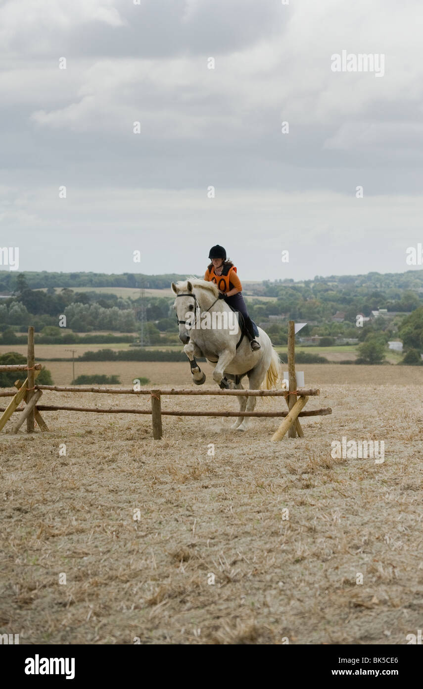 An Irish Draught horse jumping a small fence - Stock Image