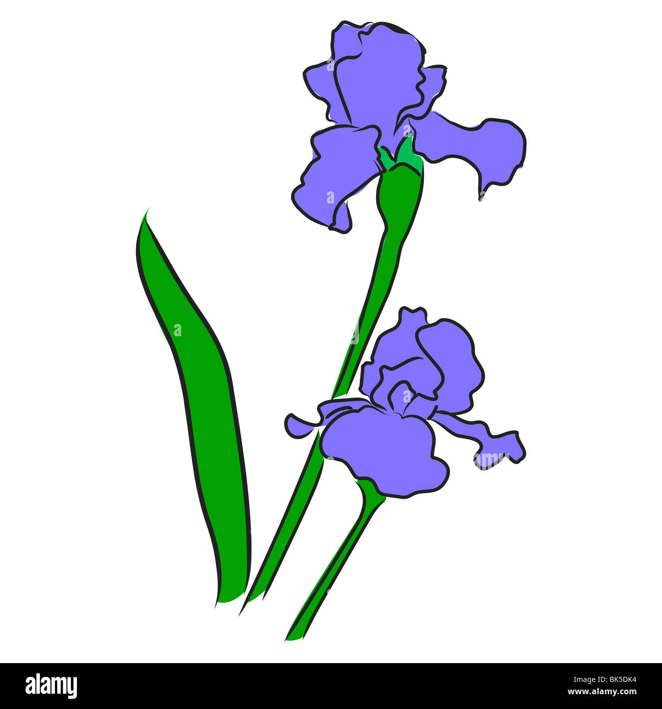 Vector illustration iris flower vector stock photos vector an illustration of a violet colored iris in bloom stock image izmirmasajfo