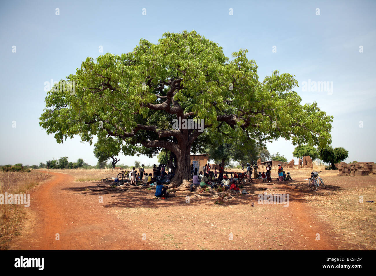 Villagers gather under a large tree in Nandom, Ghana, West Africa, Africa - Stock Image