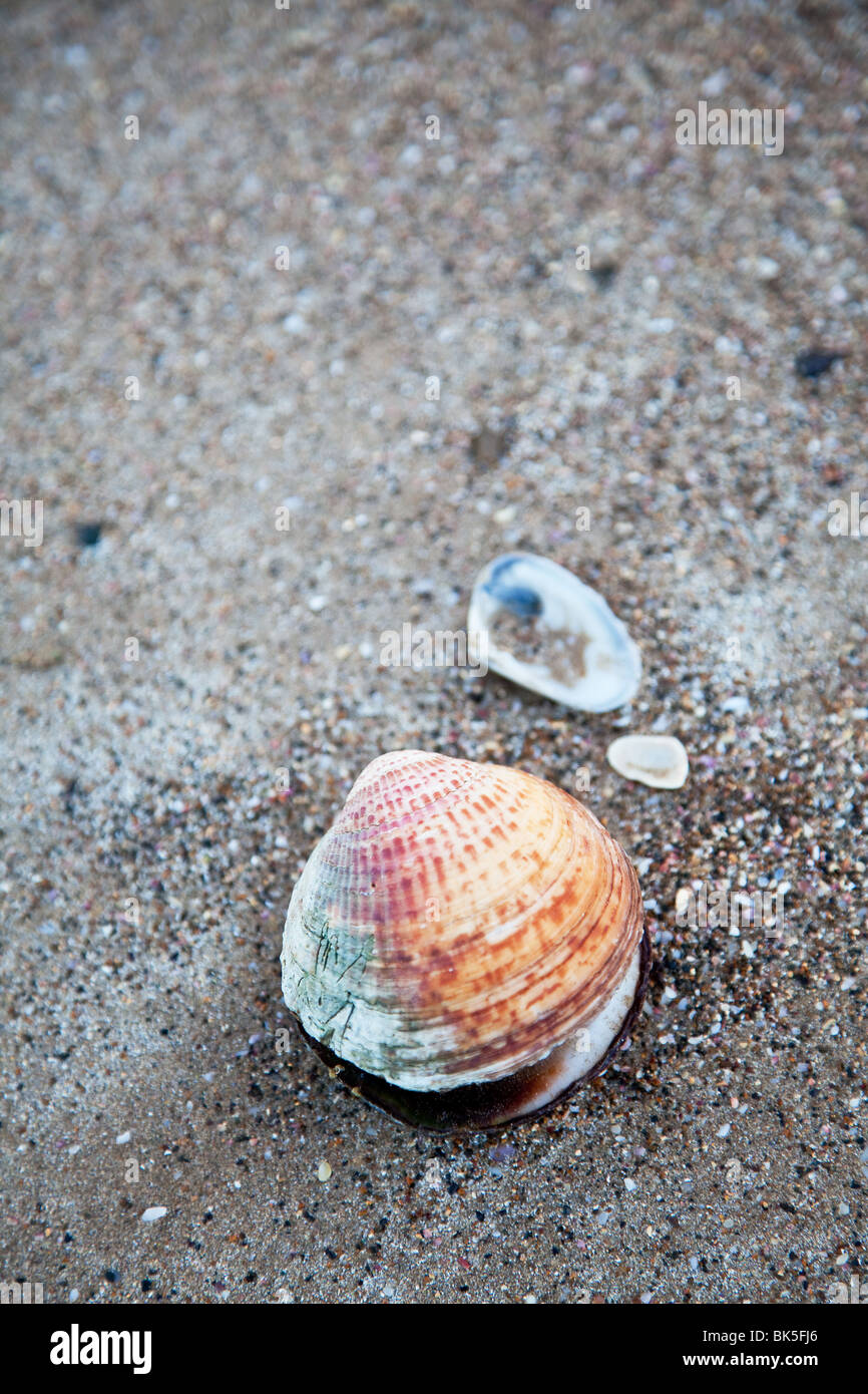 sand and shell background Stock Photo