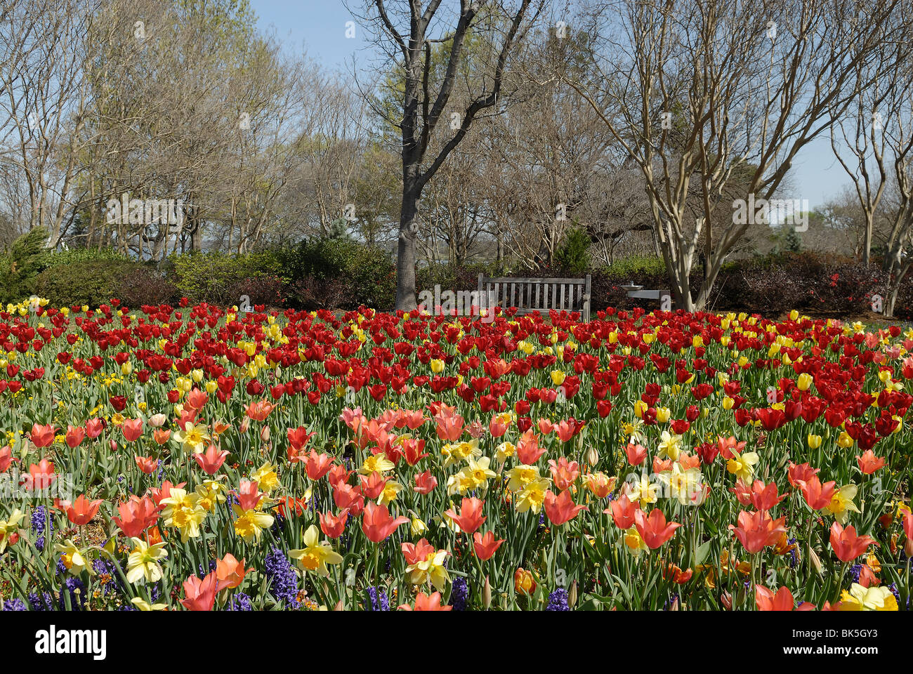 Magnificent Tulip Garden Dallas Festooning - Brown Nature Garden ...
