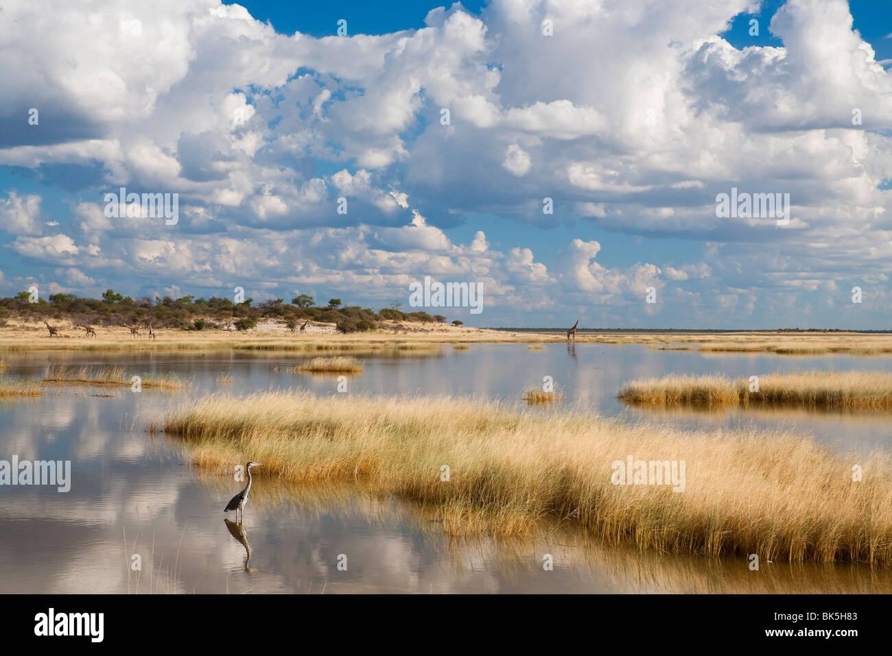 Etosha Pan after rains, Etosha National Park, Namibia, Africa - Stock Image