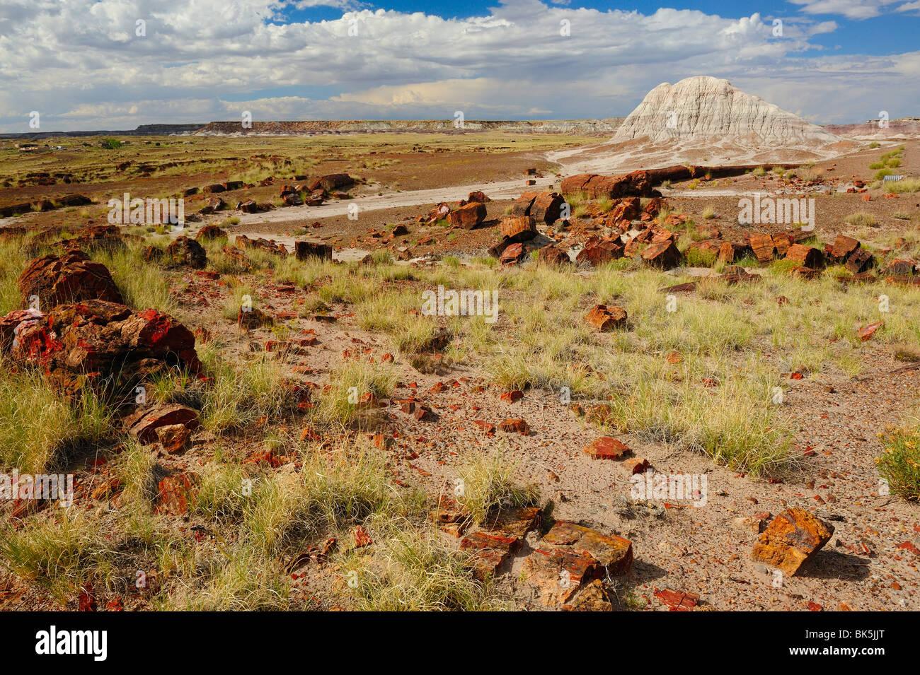 Scenic view on Petrified Forest National Park, Arizona, USA - Stock Image