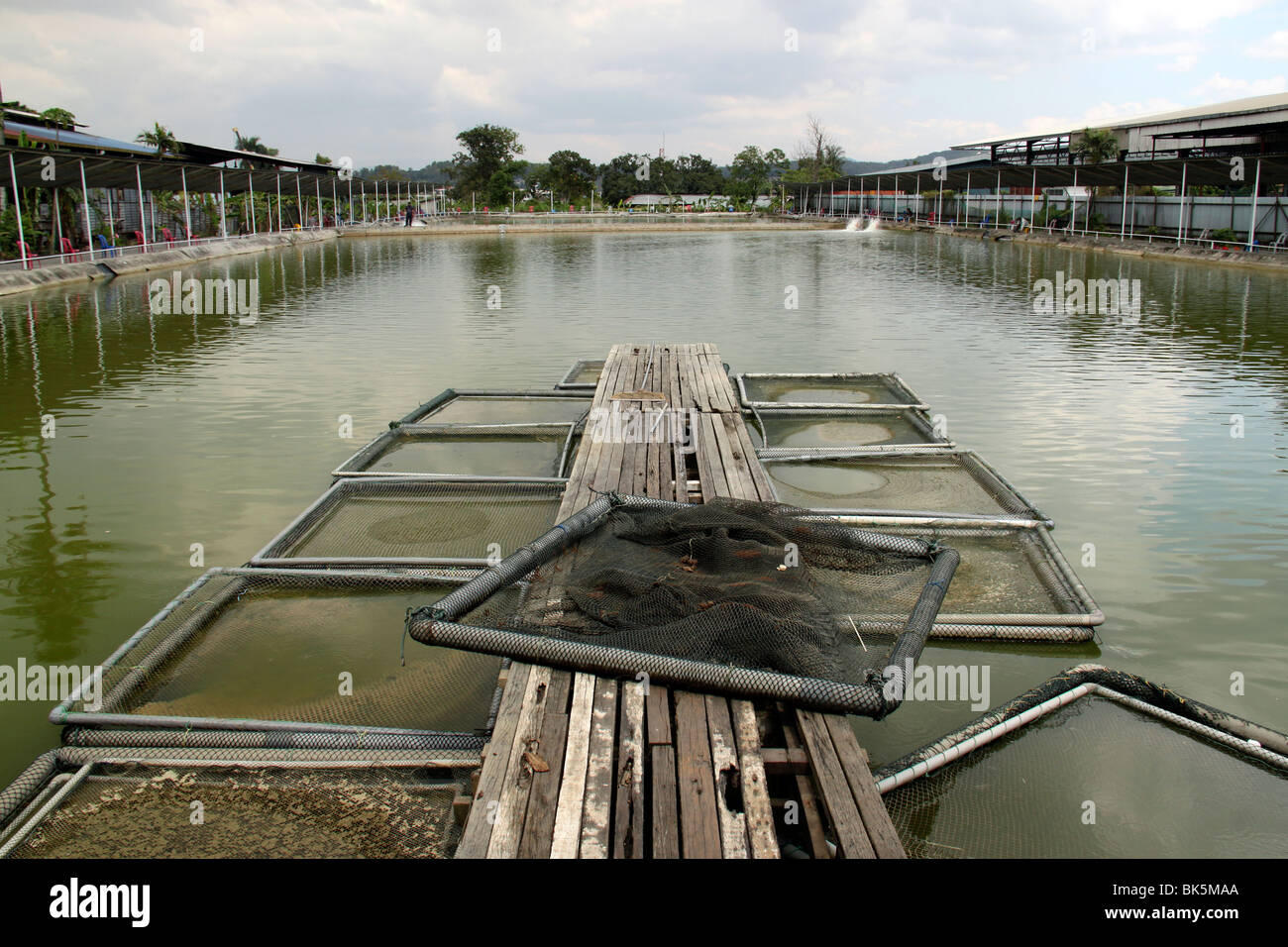 An inland aquaculture fishery farm. - Stock Image