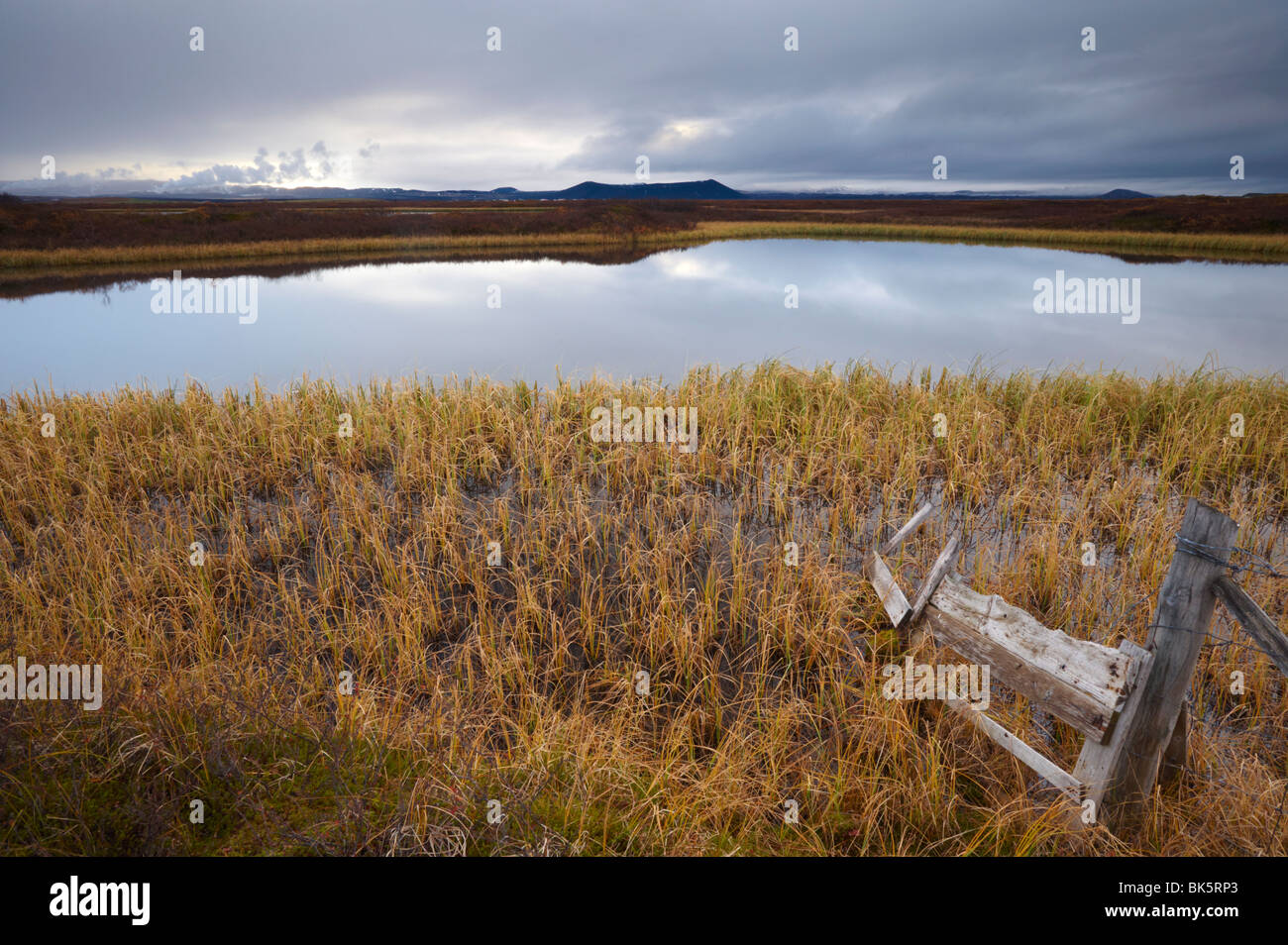 Lake Myvatn, bird protected area in autumn, north-west shore of lake, Hverfjall volcano visible in the distance, - Stock Image