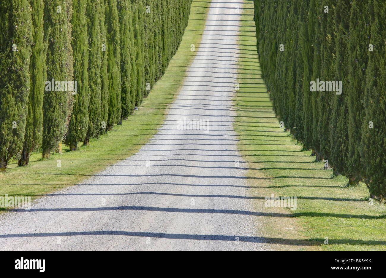 Abstract view of cypress trees and their shadows across gravel road, near Pienza, Tuscany, Italy, Europe - Stock Image