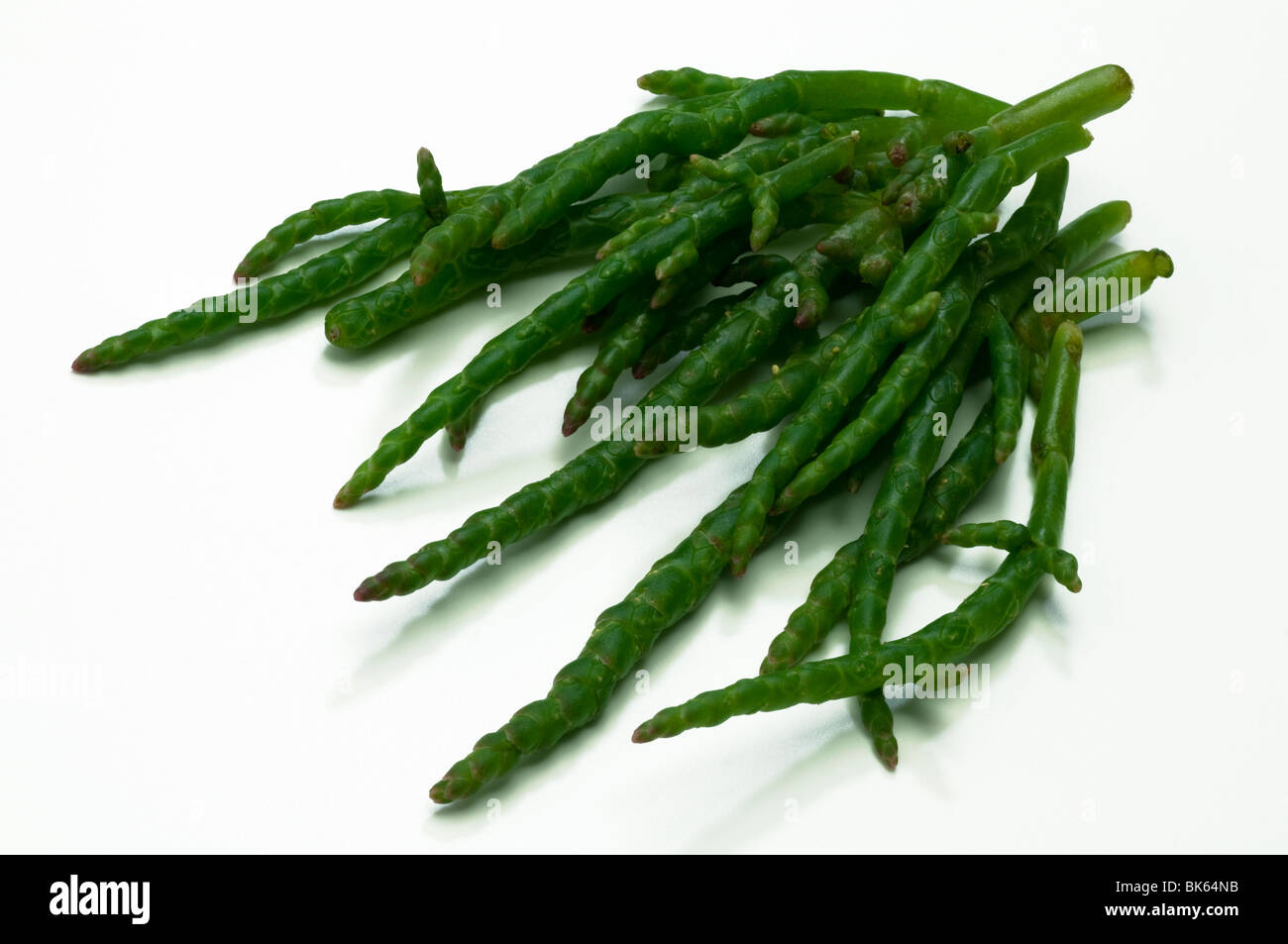 Common Glasswort, Salicorn (Salicornia europaea), green