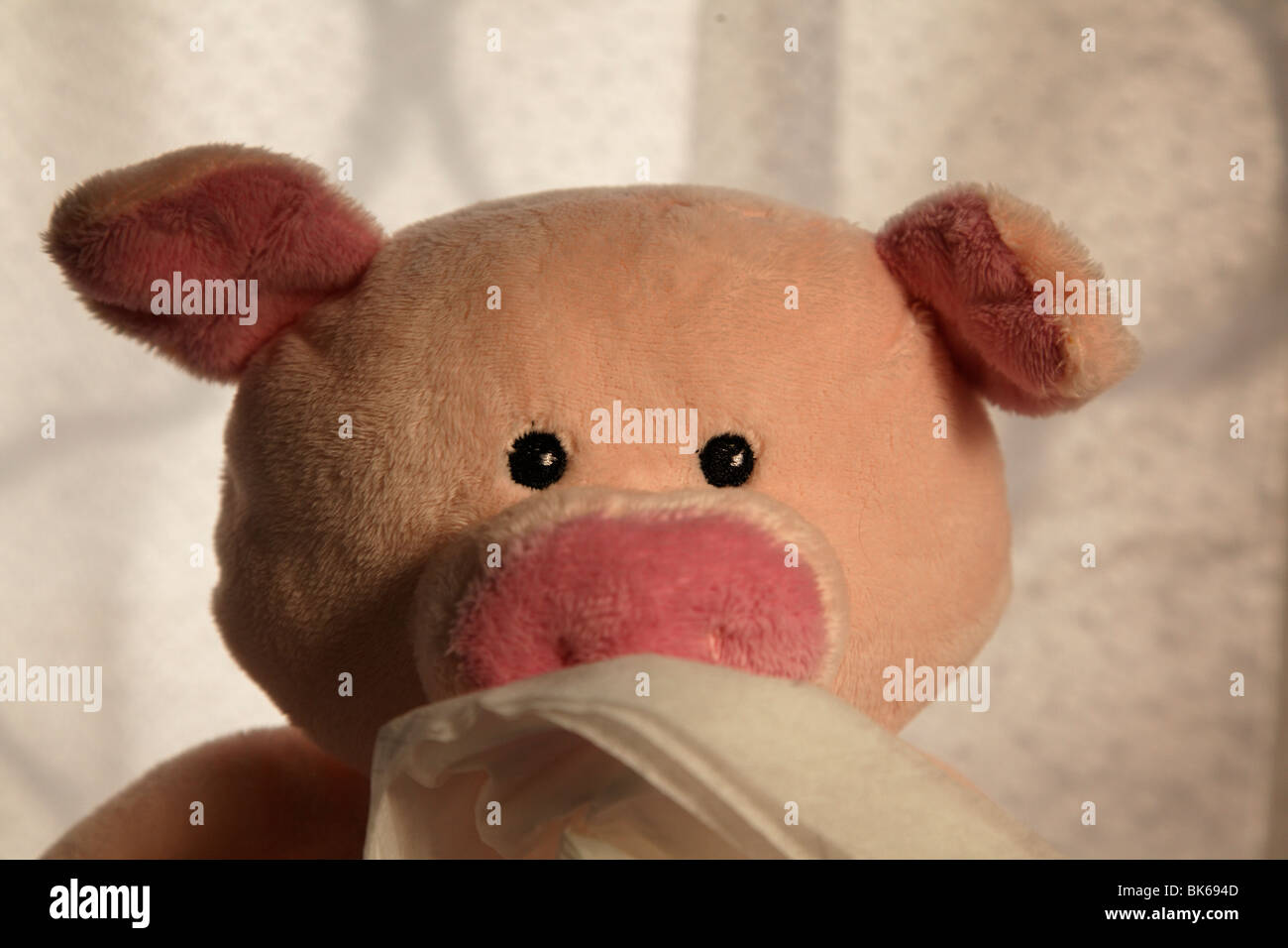 Toy pig with paper handkerchief, head shot. - Stock Image