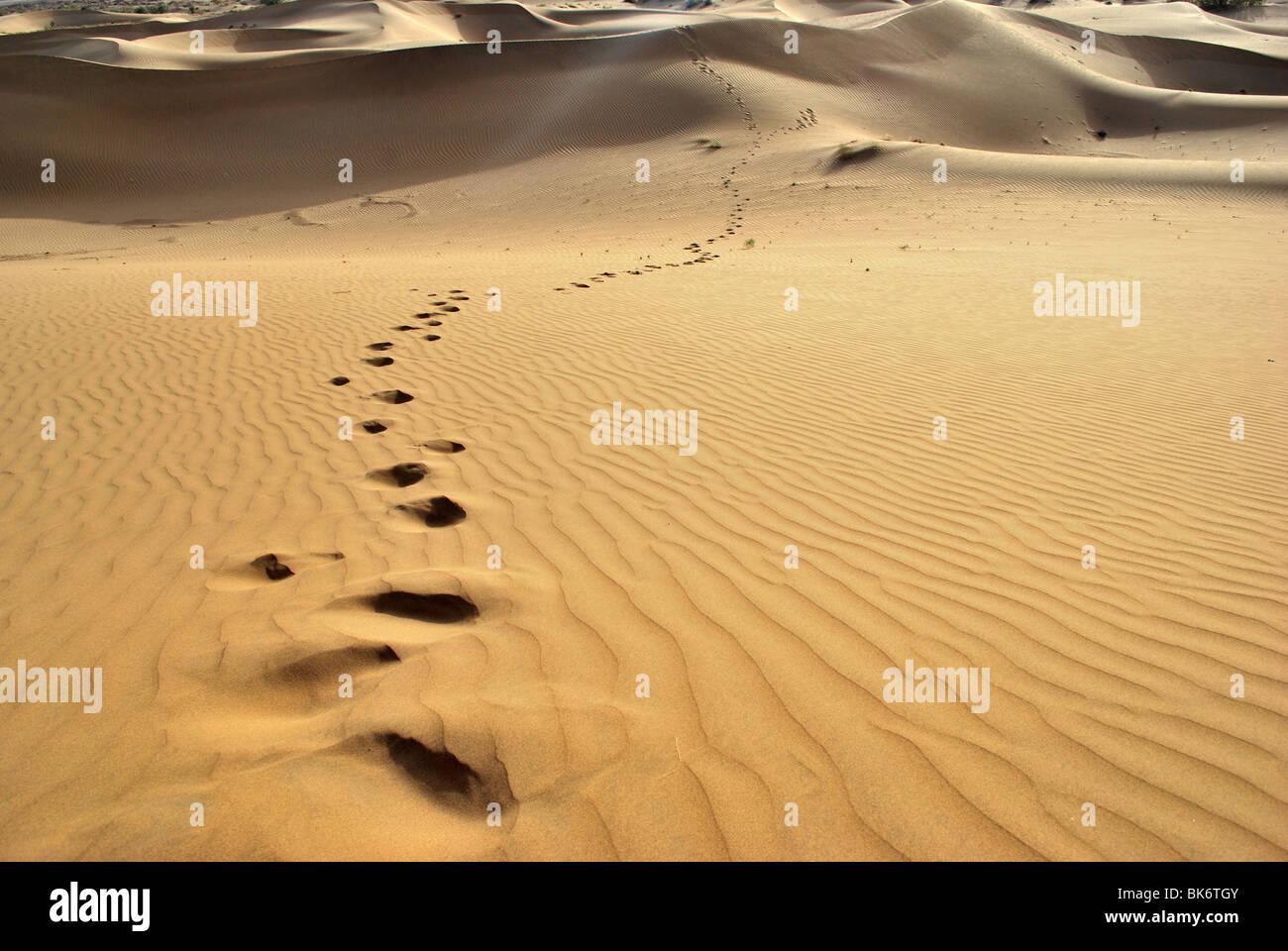 footprints in  the sand dunes, Thar Desert - Stock Image