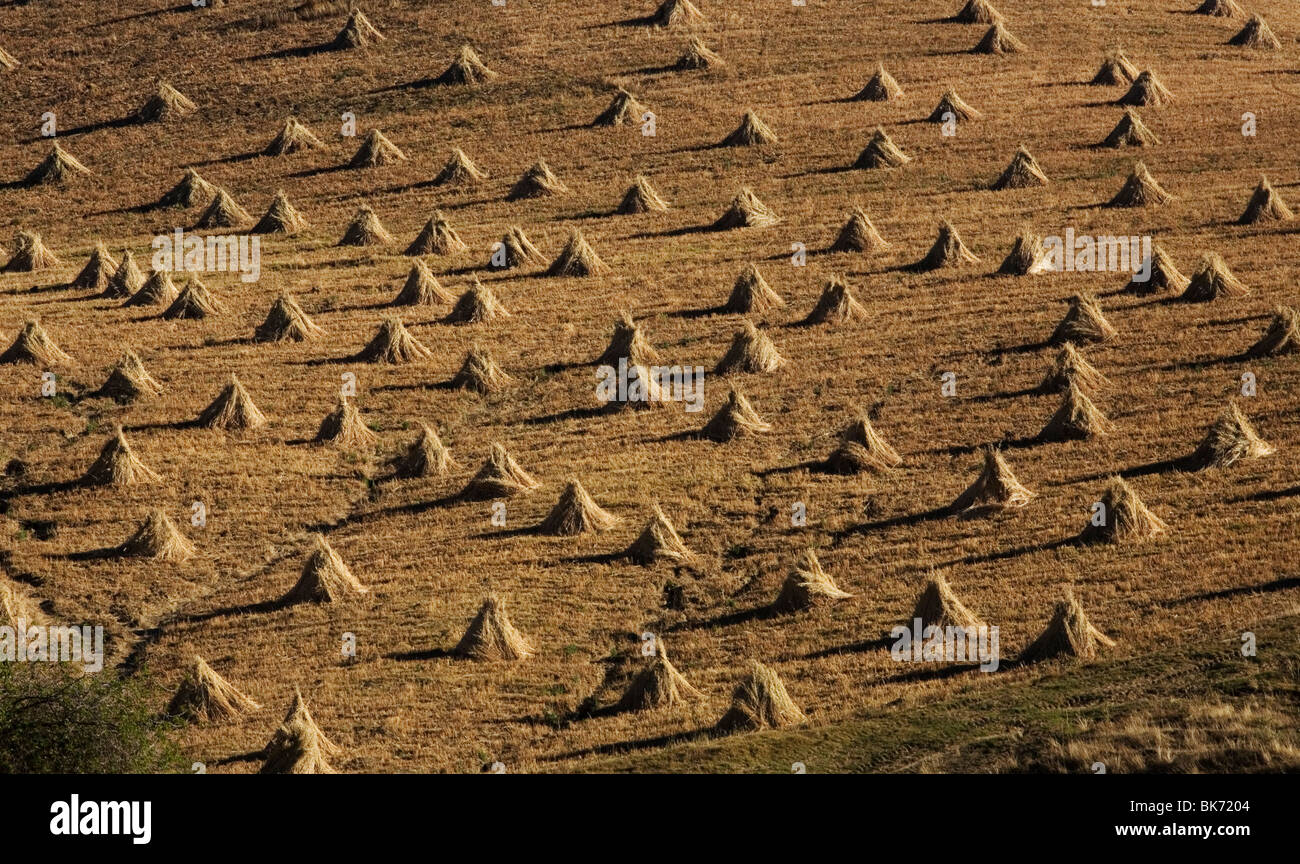 Piles of dried corn stalks sit in a field after harvest in Morelos State, Mexico, February 5, 2008. Photo/Chico Stock Photo