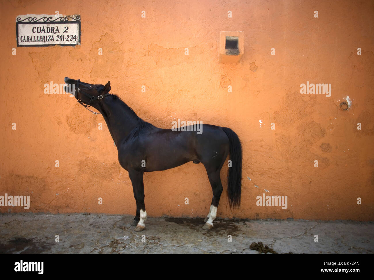 A horse stands in a stable in Mexico City - Stock Image