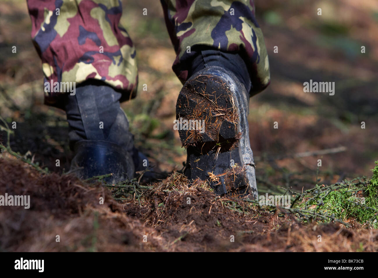 man wearing camouflage combat trousers and boots carefully walking forwards in a forest in the uk - Stock Image
