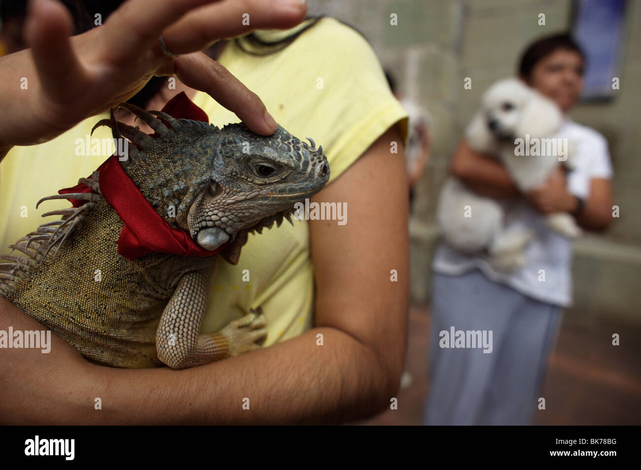 A woman pets her iguana as she attends the Blessing of the Animals celebration in Oaxaca, Mexico - Stock Image