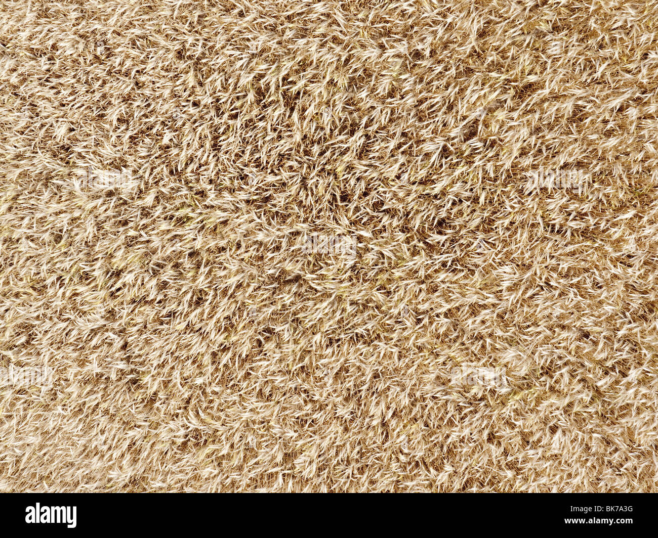 wheat field aerial view - Stock Image