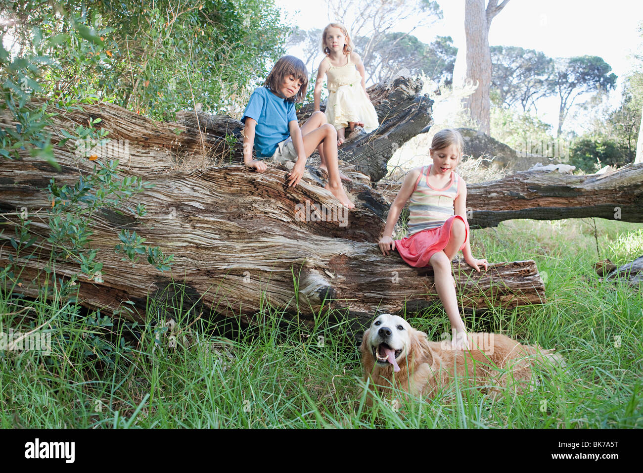 Children on a tree trunk with golden retriever - Stock Image