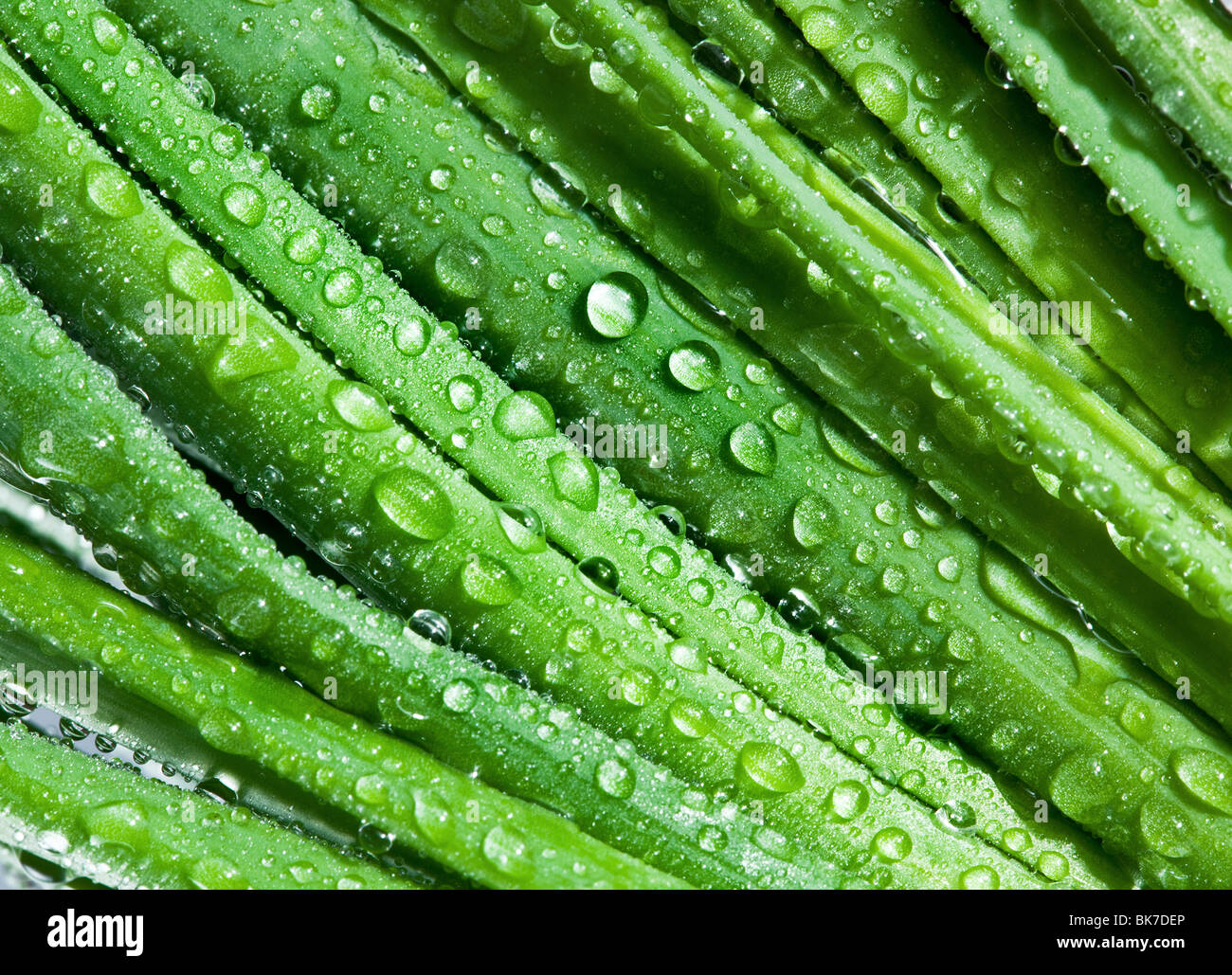 Leaves of onion closeup with water drops - Stock Image