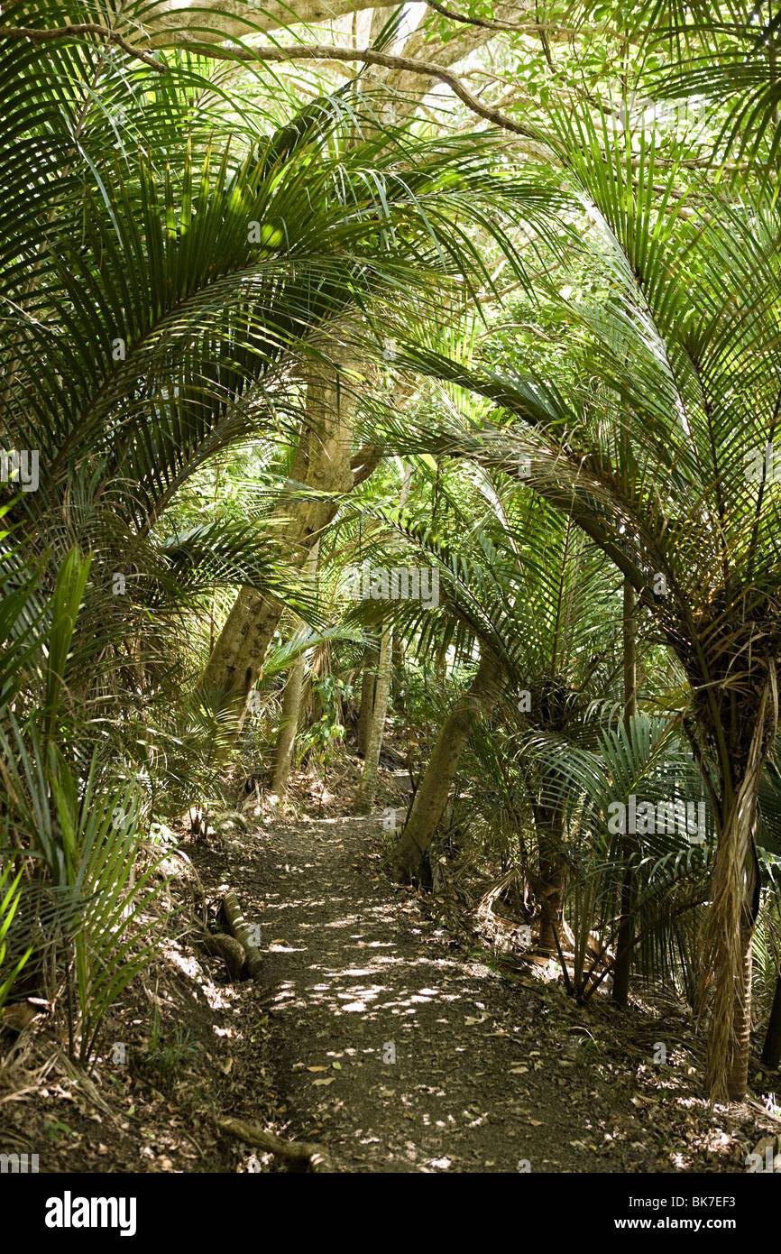 hiking path through native bush, Wendeholm National Park - Stock Image