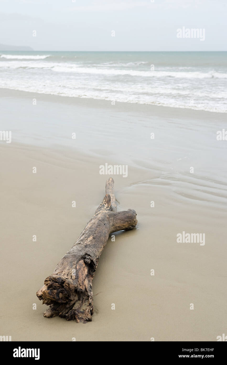 Westland, driftwood on Gillespies Beach - Stock Image