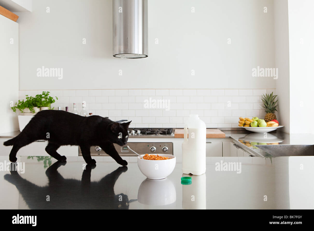 Black cat on counter with milk and cereal - Stock Image