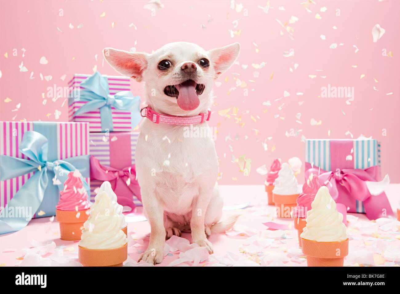 Phenomenal Chihuahua Birthday Stock Photos Chihuahua Birthday Stock Images Funny Birthday Cards Online Unhofree Goldxyz