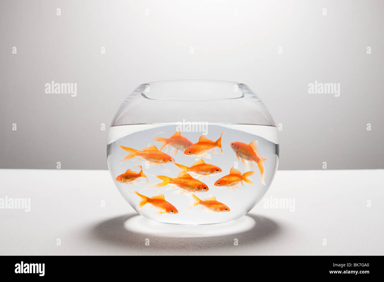 Large group of goldfish in bowl - Stock Image