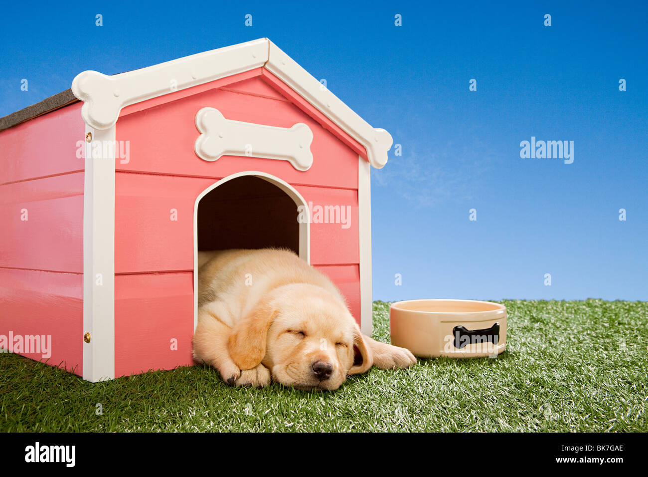 Labrador puppy asleep in kennel - Stock Image