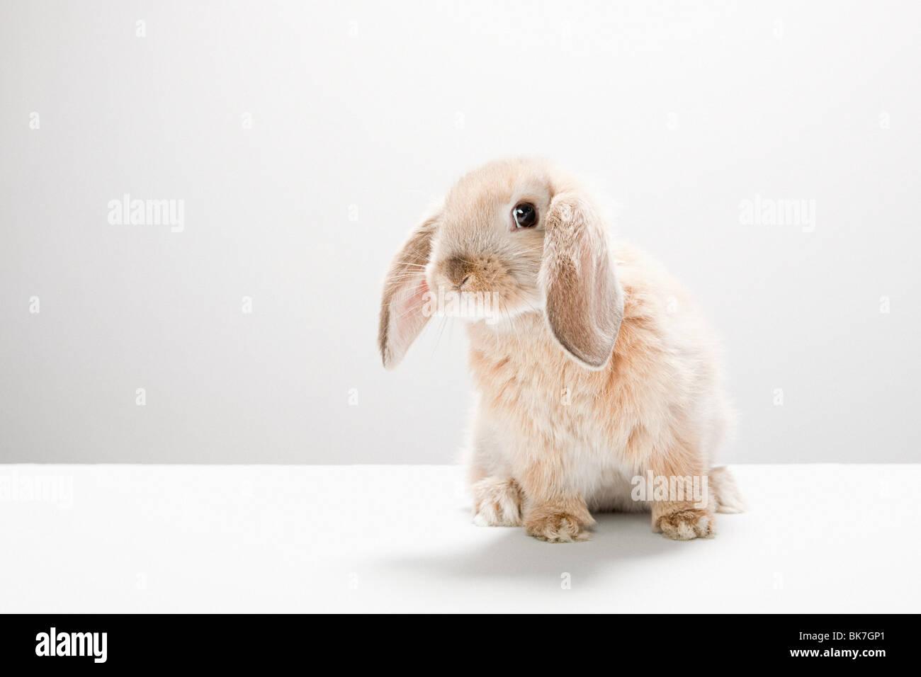 Portrait of a rabbit - Stock Image