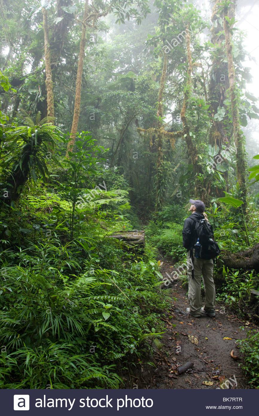 Santa Elena Biological Reserve, Costa Rica Stock Photo