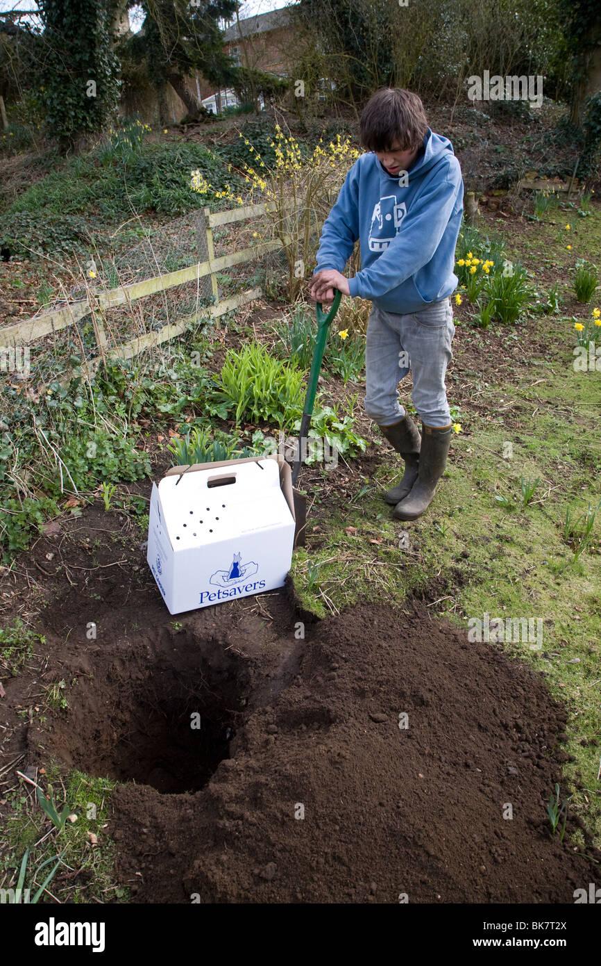 Model released teenage boy digging hole in garden to bury ...