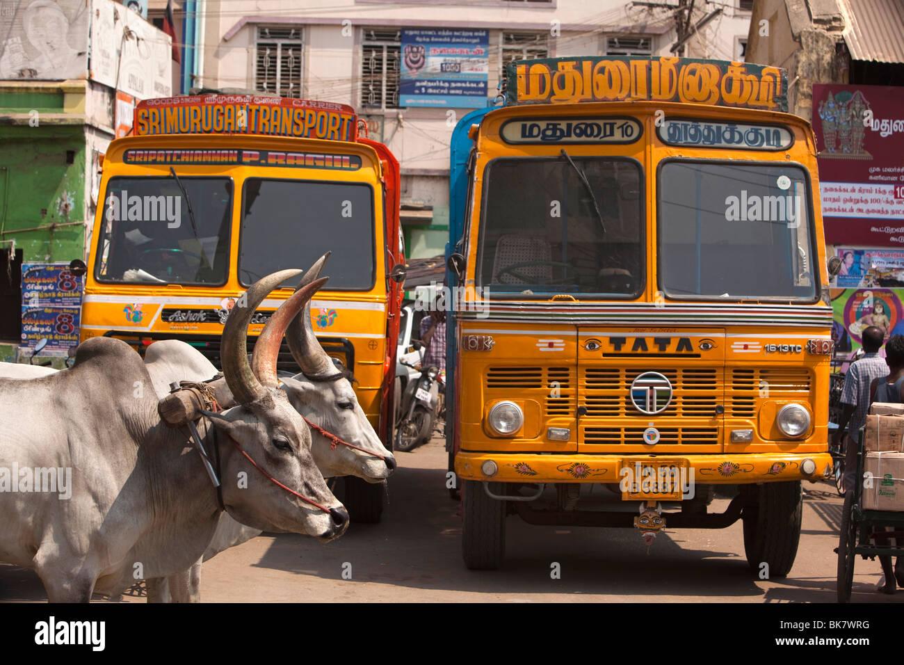 India, Tamil Nadu, Madurai, road traffic, bullock cart passing heavy haulage lorries Stock Photo