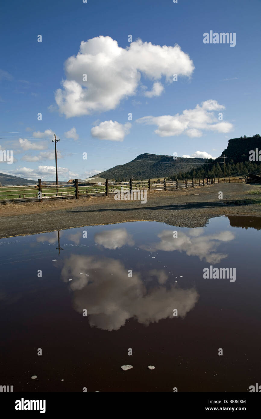 Spring clouds in a blue sky reflected in a rain puddle on a cattle ranch in central Oregon - Stock Image