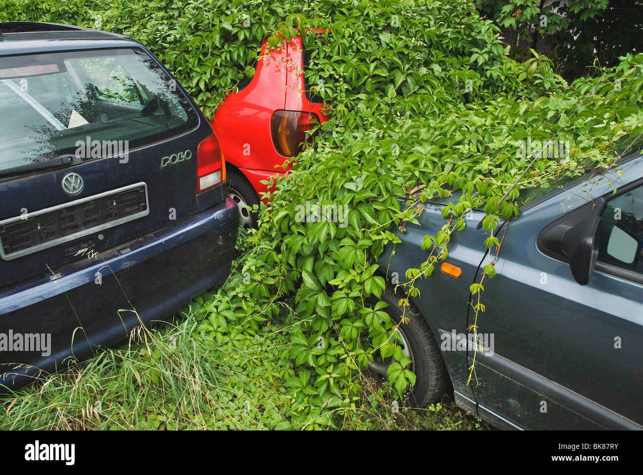 Parked cars overgrown with creepers, wrecking yard, environmental bonus - Stock Image