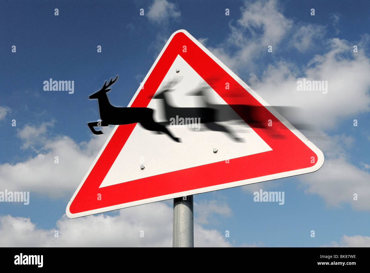 Traffic sign, deer crossing, montage with movement - Stock Image