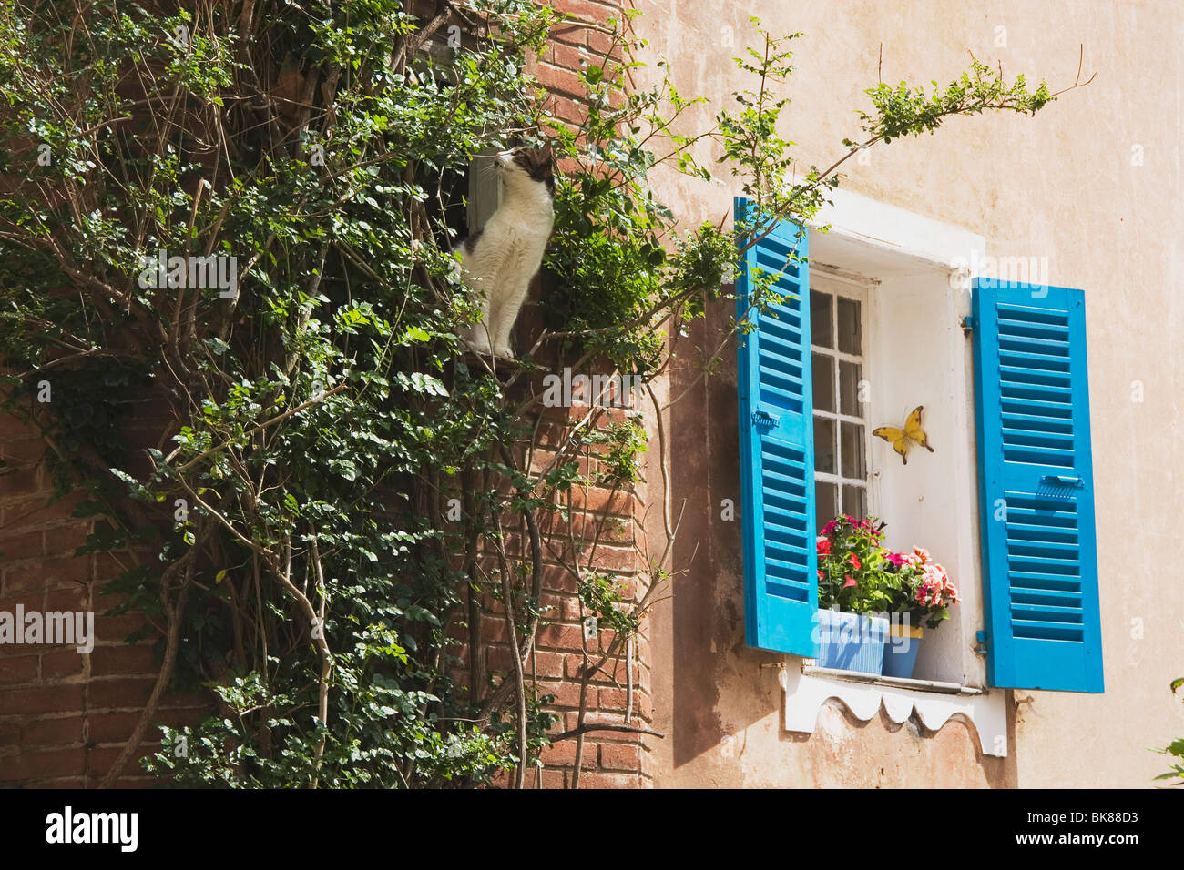 Side Of A Building With Blue Shutters - Stock Image