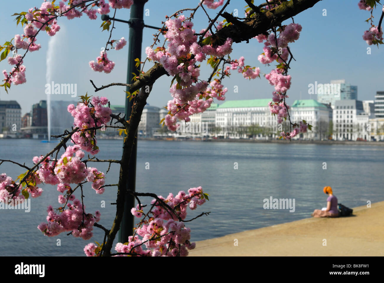 Spring blossom at the Inner Alster Lake in Hamburg, Germany, Europe - Stock Image